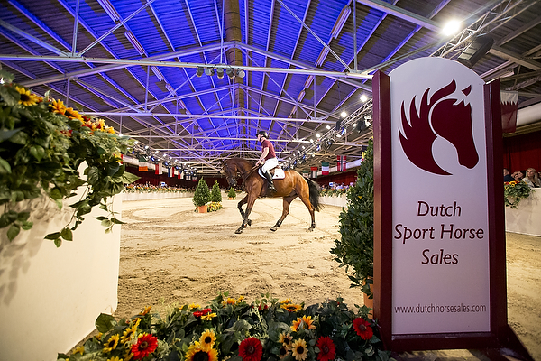 Dutch Sport Horse Sales 2015© DigiShots