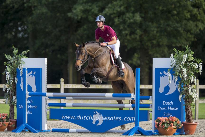 horses, moussac, petersson, dutch sport horse sale, paarden, sportpaarden, springen, oliva, spanje, competitie